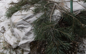 Как укрыть яблони на зиму – готовим деревья к холодам