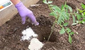 Подкормка суперфосфатом помидоров