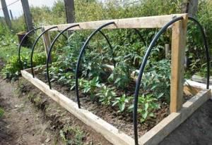 Парник своими руками для огурцов помидор перца рассады в огород на балкон