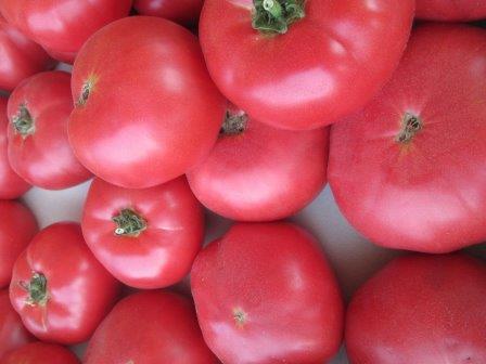 Поздние сорта томатов для открытого