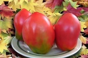 Томат Безразмерный характеристика и описание сорта урожайность отзывы фото