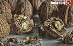 Перегородки грецких орехов — польза и вред