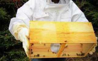 Кормушка для пчел своими руками (фото)