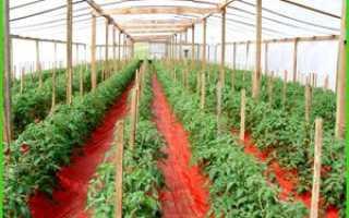 Какими минеральными удобрениями подкармливать помидоры в теплице после высадки