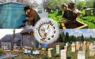 Календарь работ на пасеке для пчеловода
