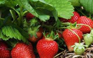 Чем подкормить клубнику ранней весной до цветения для лучшего урожая, удобрение земляники минеральными и народными средствами