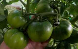 Описание, характеристика, посев на рассаду, подкормка, урожайность, фото, видео и самые распространенные болезни томатов сорта «Клубничное дерево»