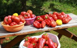 Как вырастить хорошую рассаду томатов и перца в условиях дома: пошаговый алгоритм посева семян, а также как правильно размещать помидоры рядом с другими пасленовыми?
