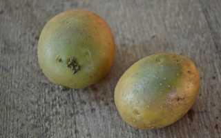 Зеленая картошка: можно ли употреблять ее в пищу и почему она опасна