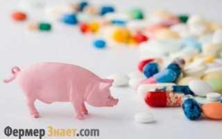 Частые болезни свиней: симптомы, лечение, профилактика