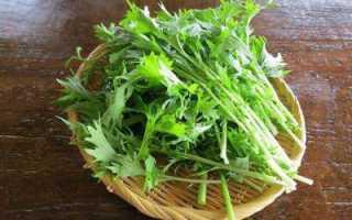 Японская капуста мизуна: описание, особенности выращивания и применение