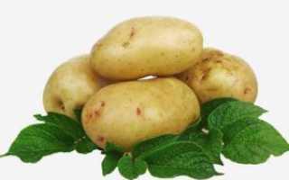 Картофель Скарб: описание сорта, выращивание, отзывы
