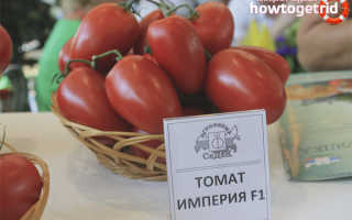 Томат Империя — описание и характеристика сорта