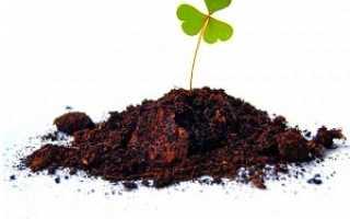 Как приготовить почву для рассады — помидоров, перца, огурцов