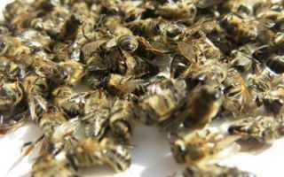 Лечение аденомы простаты пчелиным подмором: плюсы и минусы, рецепты приготовления, а также профилактика заболеваний предстательной железы препаратами из пчел