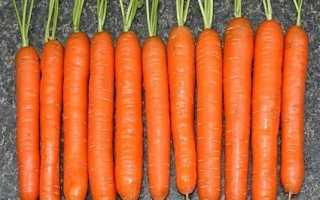 Лучшие сорта моркови для Урала: описание с фото
