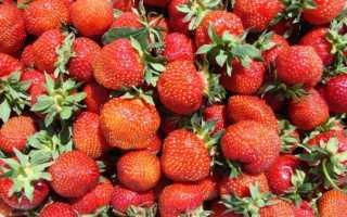 Топ 10 высокоурожайных сортов клубники: перечень лучших сортов, их достоинства и недостатки