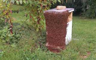 Пчеловодство: роение пчел и меры его предупреждения