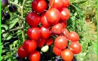 Лучшие голландские сорта томатов для теплиц — Всё про теплицы