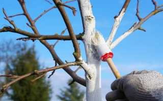 Как подготовить молодую яблоню к зиме?