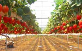 Клубника на гидропонике: выращивание своими руками в домашних условиях, технологии и системы