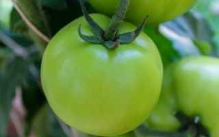 Подкормка для томатов в период плодоношения