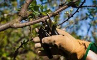 Как правильно обрезать яблоню весной – советы начинающим садоводам, В саду ()