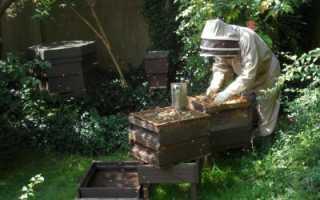 Дымарь для пчел своими руками особенности виды