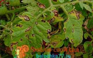 Болезни картофеля: фото, описание, способы лечения