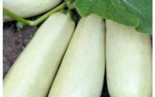 Выращиваем кабачок
