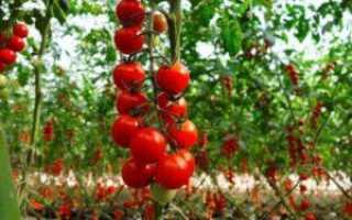 Томат Спасская башня: описание и характеристика сорта, отзывы садоводов с фото
