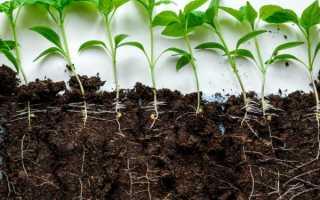 Подготовка земли для рассады перца
