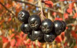 Целебные свойства черноплодной рябины (аронии)
