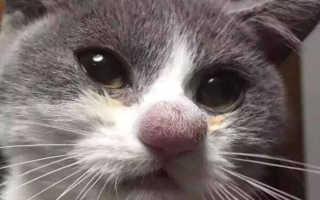 15 кошек, которых укусили пчелы, Плющ и Пчела
