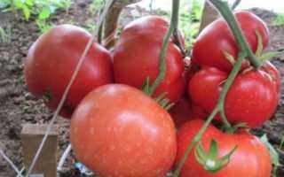 Томат Бабушкино: характеристика и описание сорта, отзывы, урожайность, фото