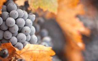 Осенняя обрезка винограда и укрытие лозы на зиму