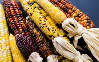 Декоративная (земляничная) кукуруза: фото и выращивание