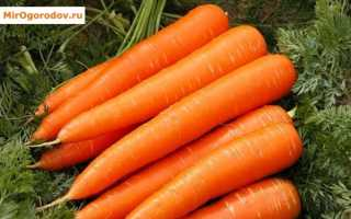Лучшие сорта моркови: характеристика и районирование