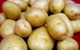Сорт картофеля — Голландка: подробное описание, характеристика видов и фото