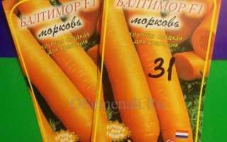 Морковь Балтимор F1: описание, фото, отзывы