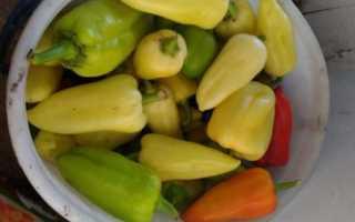 Перец Белоснежка: характеристика и описание, отзывы, выращивание, урожайность сорта