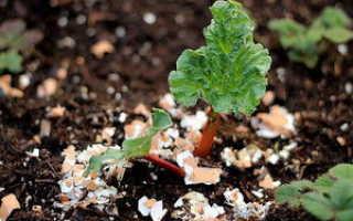 Как применять яичную скорлупу в качестве удобрения, защиты, подкормки