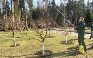 Правильное опрыскивание плодовых деревьев в саду средствами от вредителей и болезней ранней весной