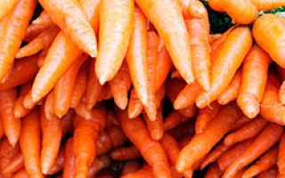 Морковь роте ризен красный великан: описание и характеристики, как сажать отзывы — eТеплица