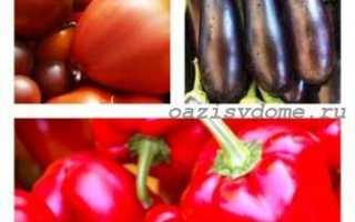 Когда сажать в Подмосковье рассаду томатов, баклажан, перцев в 2019 году по Лунному календарю