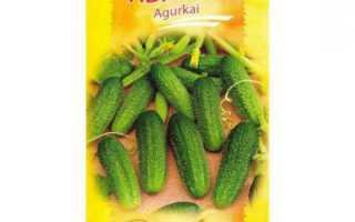 Огурцы Адам F1: описание, особенности выращивания, урожайность и отзывы