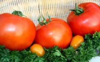 Томат Гравитет: описание и характеристика сорта, выращивание и уход с фото