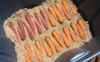 Как сохранить морковь на зиму полезная новость Из огорода