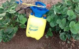 Вредители земляники садовой и борьба с ними