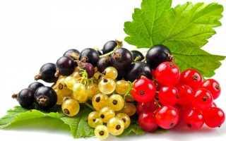 Обработка смородины от вредителей и болезней весной: польза и вред